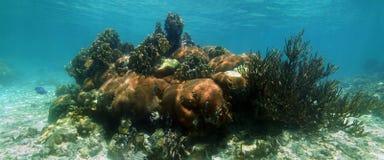 Панорама кораллового рифа стоковое изображение