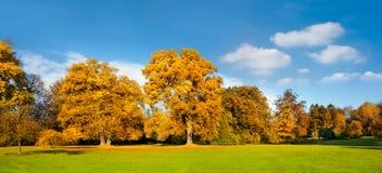 Панорама. Красивейшие деревья осени. Стоковые Изображения RF