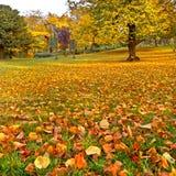 Панорама. Красивейший парк осени. Осень. стоковая фотография rf