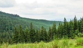 Панорама красивого леса горы Стоковые Фотографии RF