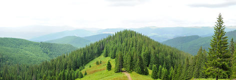 Панорама красивого леса горы Стоковое Изображение