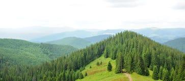Панорама красивого леса горы Стоковое Изображение RF