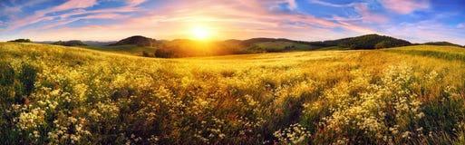 Панорама красочного захода солнца на красивом луге стоковые изображения