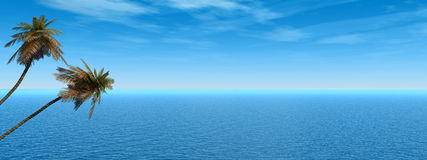 панорама ладони Стоковые Изображения