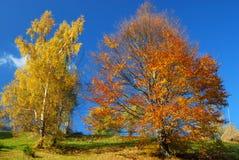 панорама ландшафта осени стоковое изображение
