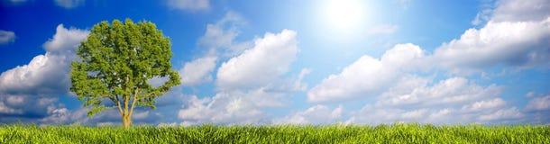 панорама ландшафта Стоковые Фотографии RF