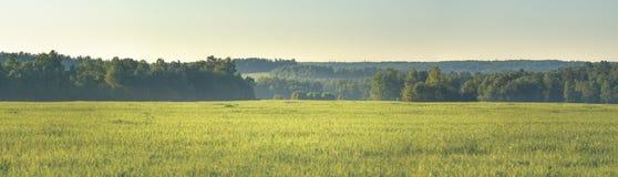 Панорама леса и полей лета Стоковые Фото