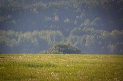 Панорама леса и полей лета Стоковые Изображения