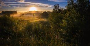 Панорама леса и полей лета Стоковая Фотография