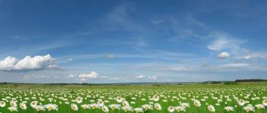 Панорама лужка Стоковые Фото
