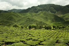 панорама Малайзии гористых местностей cameron Стоковые Фотографии RF