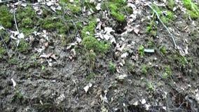 Панорама от корней дерева на банке реки до деревьев Видео используя древнее HD Steadicam сток-видео