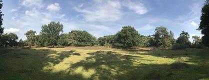 Панорама от леса Стоковые Фото