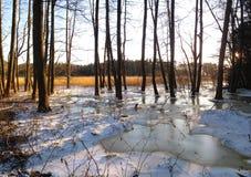 Панорама пейзажа зимы стоковое изображение rf