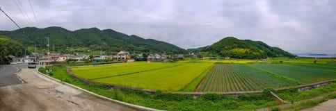 Панорама полей рисовых полей в городской местности Южной Кореи стоковые изображения rf
