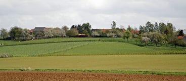панорама полей ферм Стоковые Фото