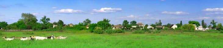 панорама поля зеленая Стоковое фото RF