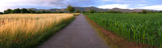панорама поля Стоковое фото RF