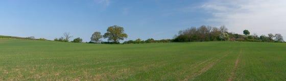 панорама поля Стоковое Изображение RF