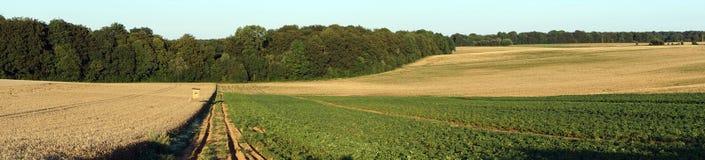 Панорама полей фермы Стоковое Фото