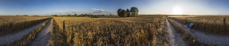 Панорама поля золота Стоковая Фотография