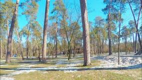 Панорама промежутка времени, парк в сосновом лесе со спортивной площадкой в предыдущей весне, на лужайке там карманы unmelted сток-видео