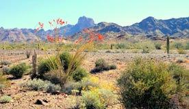 Панорама пустыни сценарная Стоковые Фотографии RF
