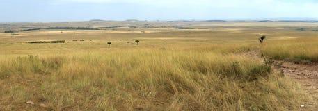 Панорама саванны в национальном парке Кении стоковые изображения rf