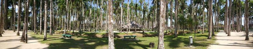 Панорама садов ладони Стоковое Изображение RF