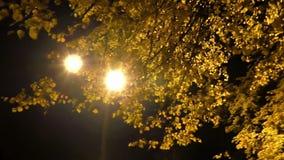 Панорама света ночи с листвой сток-видео