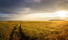 Панорама сельского поля с пшеницей и дорогой на заходе солнца, Россией Стоковые Фото