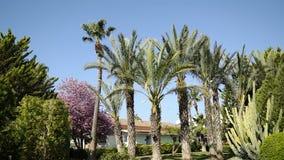 Панорама слева направо, высокорослые пальмы пошатывая в ветре видеоматериал