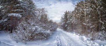 Панорама снежных древесин, дорога, Россия, Ural стоковые фотографии rf