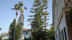 Панорама снизу вверх хвойного дерева, которое пошатывает в ветре сток-видео