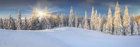 Панорама солнечного ландшафта зимы в горах стоковое изображение