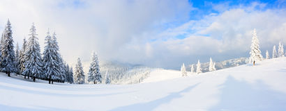 Панорама с деревьями в снеге Стоковое фото RF