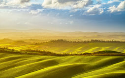 Панорама Тосканы туманная на заходе солнца, Rolling Hills, полях, луге Стоковое фото RF