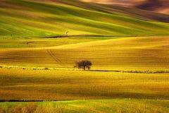Панорама Тосканы, Rolling Hills, поля, луг и сиротливое дерево Стоковое Изображение RF
