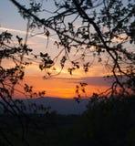 Панорама холмов во время захода солнца через ветви дерева Стоковая Фотография RF