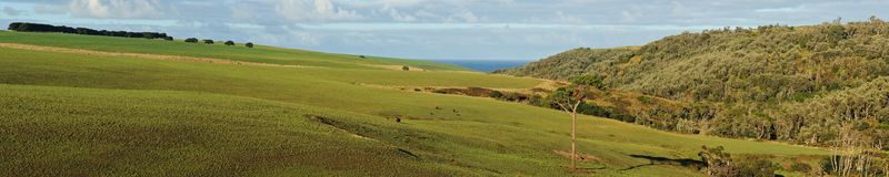 панорама холмов пущи Стоковое Изображение RF