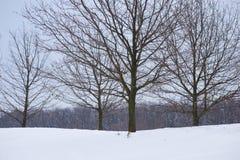Панорама чуть-чуть деревьев в зиме Стоковая Фотография RF