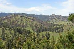 Панорама Black Hills в лете стоковое изображение