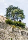 Панорама Castelbrando Стоковые Изображения RF