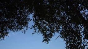 Панорама 4K ветвей деревьев видеоматериал