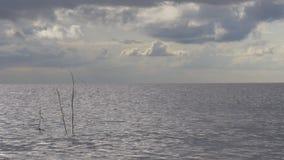 Панорама 4k Флорида США озера неба лета сток-видео