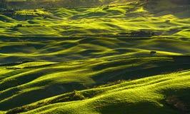 Панорама, Rolling Hills, поля и луг Volterra на заходе солнца T Стоковое Фото