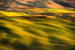 Панорама Volterra, Rolling Hills, поля, луг и сиротливое дерево Стоковое Изображение