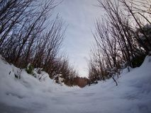 Панорамная съемка снега и деревьев Стоковые Фото