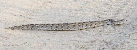 Панорамное изображение змейки сумматора слойки Стоковые Изображения RF