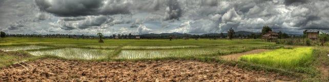 Панорамное поле риса ландшафта Стоковое фото RF